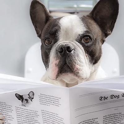 My Dog's Poop: Diarrhea