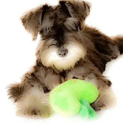 My Dog's Vomiting: Pancreatitis