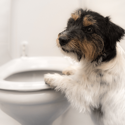 My Dog's Poop: Poop Consistency