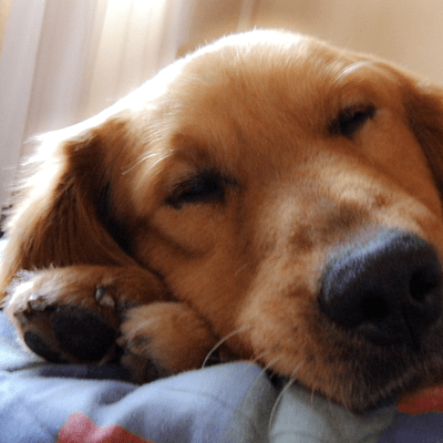 My Dog's Vomiting: Why Is My Dog Throwing up?