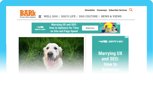 Dog Blogs to Follow:  The Other End of the Leash