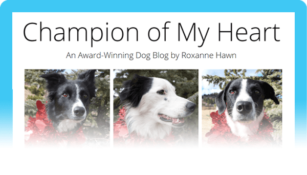 Top Dog Blogs: Champion of My Heart