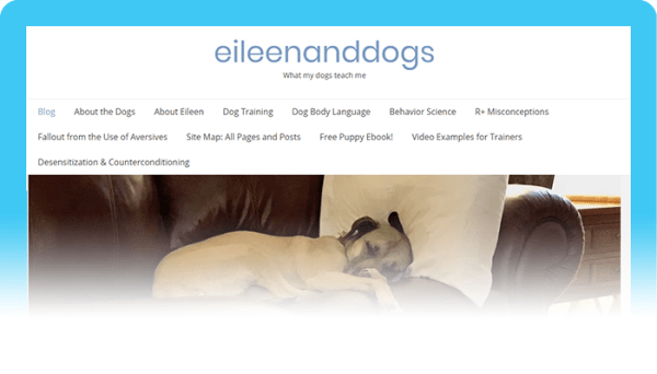 Best Dog Blogs of 2020:  Eileen and Dogs