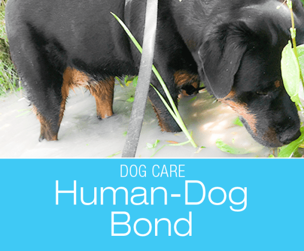 Improving the Human-Dog Bond: How to Have a Better Relationship with Your Dog