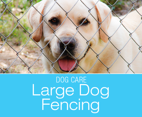 Large Breed Dog Fencing: Humane and Effective Fencing