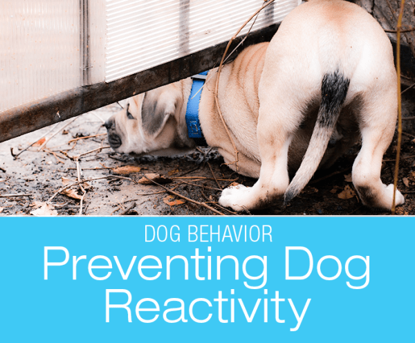 Preventing Dog Reactivity: Don't Let Them Run That Fenceline