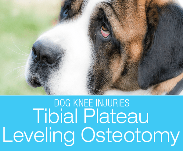 Tibial Plateau Leveling Osteotomy: My Two Cents on TPLO Repair