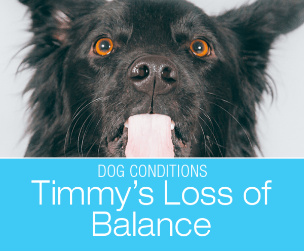 Loss of Balance in a Dog: Timmy Develops a Head Tilt and Starts Falling into His Side