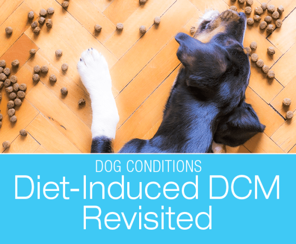Canine Diet-Induced DCM Revisited: Results of the Research Review Looking at the Recent Rise in Dilated Cardiomyopathy in Dogs