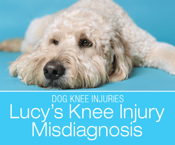 Dog CCL Injury Misdiagnosis: Lucy's Hind Leg Lameness