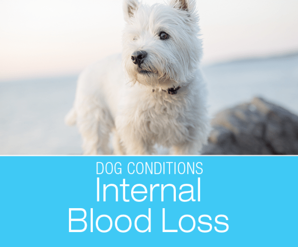 Internal Bleeding in a Dog: Blood loss for any reason is bad news. When your dog is bleeding internally, how can you tell?