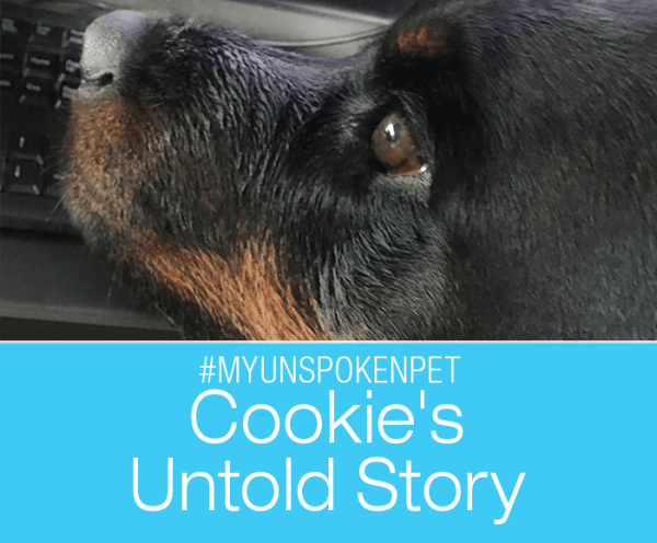 Rescuing a Heart Dog: Cookie's Untold Story #MyUnspokenPet