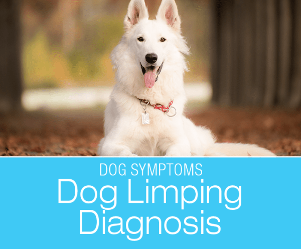 Dog Lameness Diagnosis: Why It Is Essential to Figure out What's Wrong