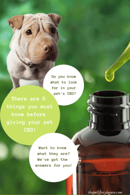 5-Things-to-Know-Before-Giving-CBD-to-Your-Dog-by-Rebecca-Sanchez-The-Pet-Lifestyle-Guru-683x1024-1