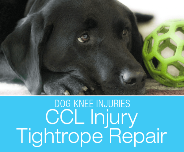 TightRope® CCL Fixation System: Dorie's Knee Surgery. The TightRope surgery was developed as an upgrade to the lateral suture stabilization (LSS) for cruciate injuries in dogs.
