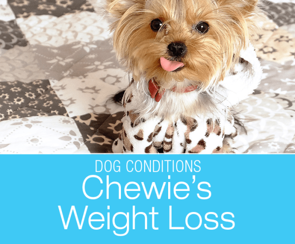 Weight Loss and Excessive Thirst: Chewie's Diabetes Diagnosis