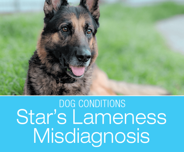 Dog Lameness Misdiagnosis: Did Star Tear Her Cruciate Ligament?