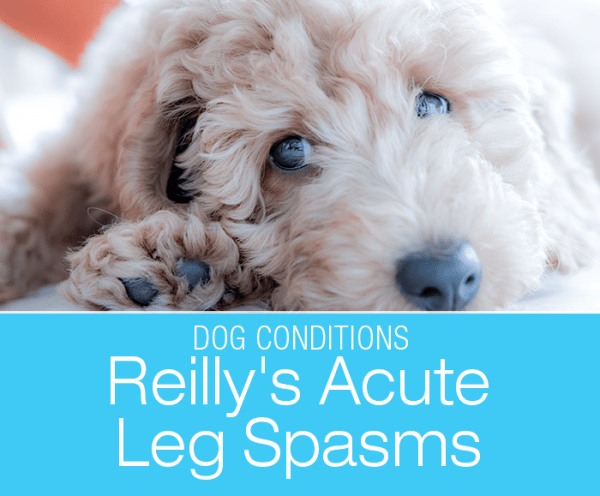 Carbon Monoxide Poisoning in Dogs: Reilly's Acute Leg Spasms