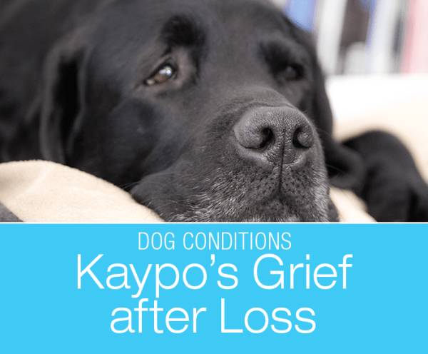 Do Dogs Grieve: Kaypo's Mourning The Loss of Her Mother