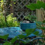 image of garden features