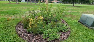 Flowering Plants in The Garden Bed
