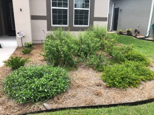 Garden Bed After Weeding