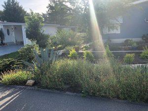Ray of Sunshine on The Garden