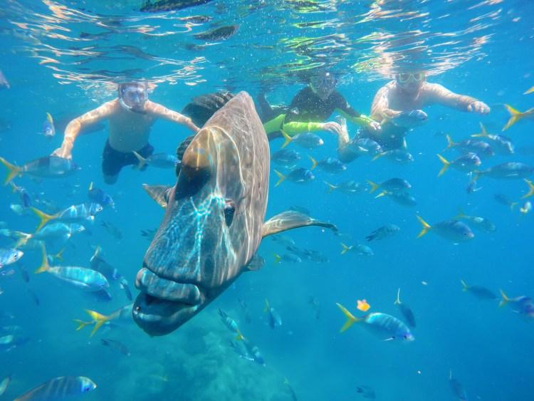 Snorkelling_Whitsundays_Australia