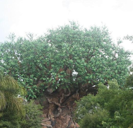 My Dreams of Disney, Tree of Life, Animal Kingdom