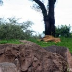 13 Days: Kilimanjaro Safaris