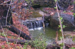 A growing waterfall in the forest near Woodberry