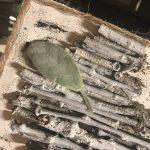lambs ear leaf for twig heart canvas