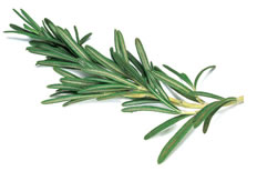 18-Spices-Scientifically-Proven-To-Prevent-and-Treat-Cancer-15-Rosemary