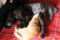 The kittens.