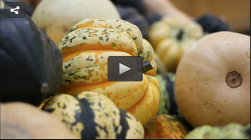 Cooking with winter squash