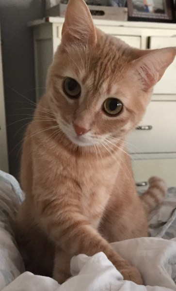 Meow meow, an indoor-only cat, darted out the front door of her Cascade Lane home Wednesday night. Her owners have scoured the neighborhood  with no luck. She is a small, orange-and- white, short-haired cat. If you have seen Meow  meow, please call Jen at 206-697-6952.