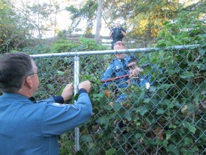 The suspect was located in the brush and the fence was cut to assist in safely removing her from the area.