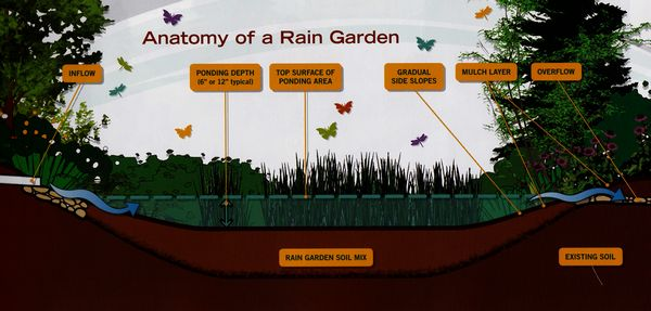 A rain garden acts as a natural trap for runoff from roofs, roadways and other impervious surfaces. The base soil acts as a sponge that absorbs and slowly releases the water, while filtering out particulates and providing habitat for a rich flora of micro-organisms that help remove contaminants (from The Rain Garden Handbook published by the Washington State Department of Ecology and WSU Extension Service).
