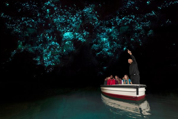 Photography was not allowed inside the glowworm caves but here is one courtesy of www.waitomo.com.