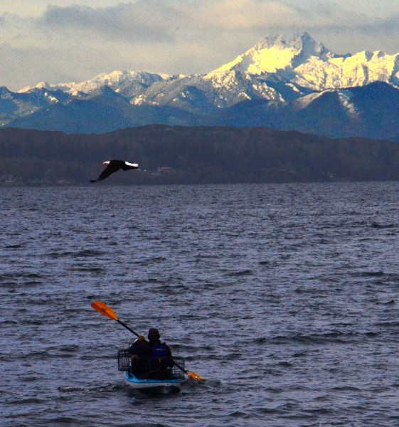 From Larry Vogel:  Seen at Marina Beach a kayaker, an eagle and fresh snow on the Olympics.