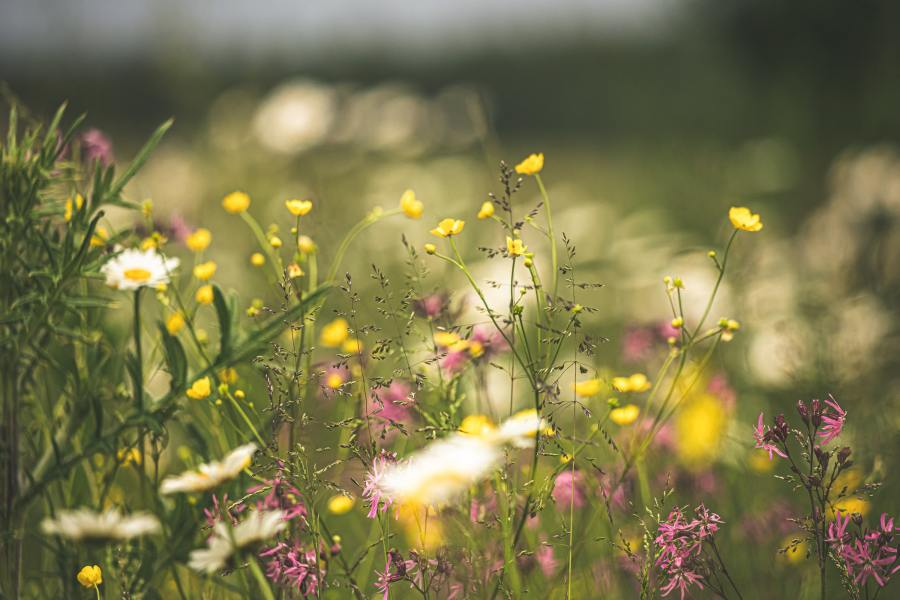 Stay positive and enjoy this beautiful wildflower meadow in the summer photo