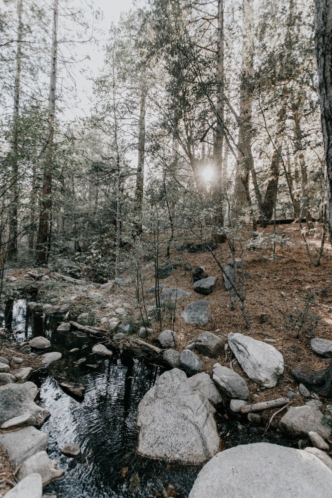 Idyllwild Mountain Elopement-62
