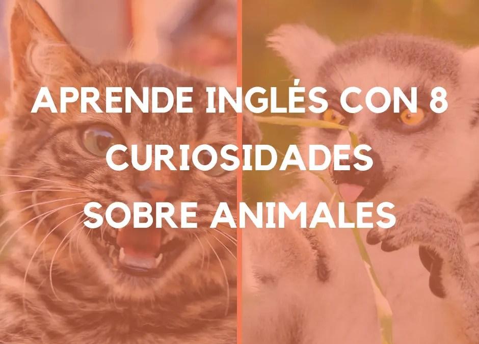 Aprende inglés con 8 verdades INCREÍBLES acerca de animales