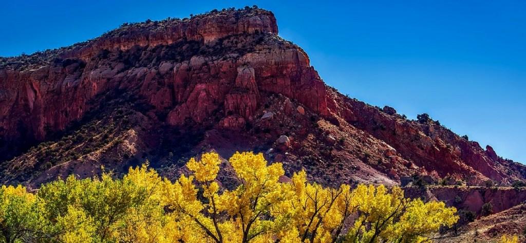 Fall foliage in Albuquerque