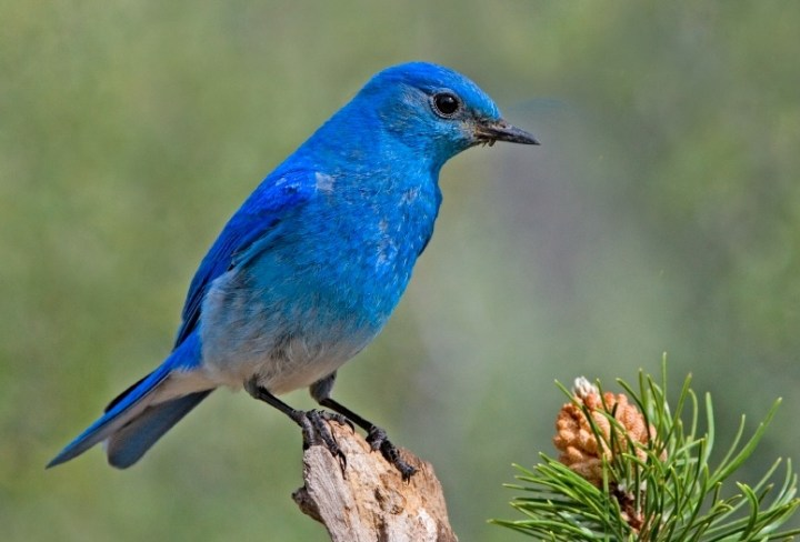 A Bird's Song: How Songbirds Could help Researchers Treat Speech Disorders