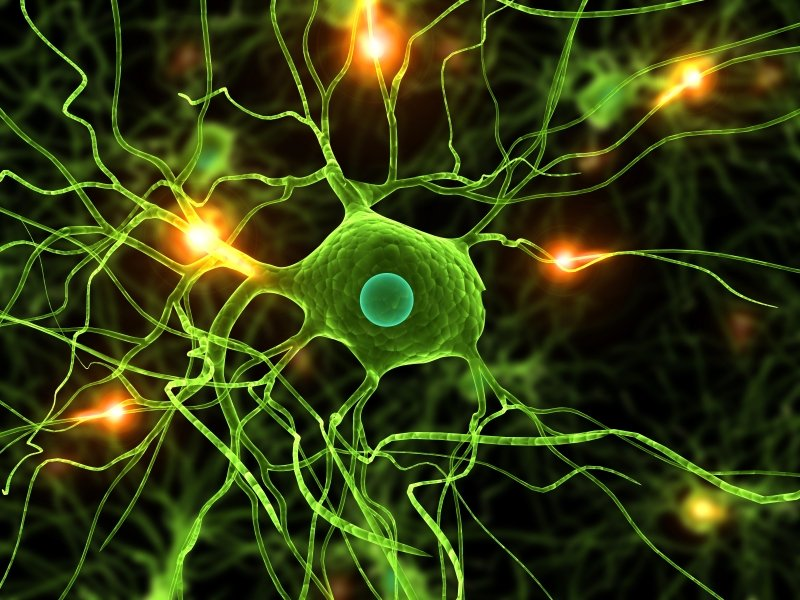 The Role of Neuroinflammation in Alzheimer's Disease