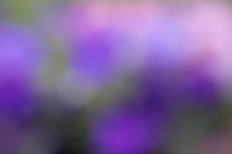 Abstraktflower01