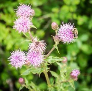 Late season flowers with pollinators