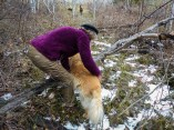 Lindsey helps one of her old dogs over a log