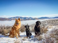 Three good dogs. Look how much Sky has grown!